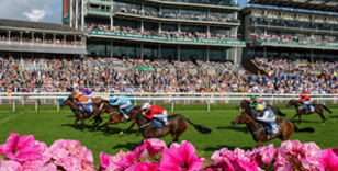 YORK RACECOURSE SEASON SEES A RECORD NUMBER OF RUNNERS